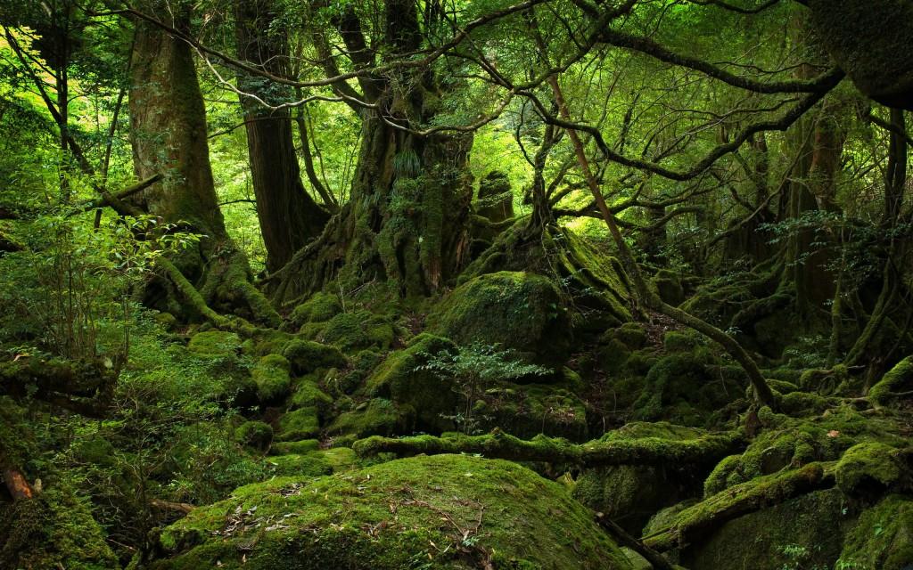 http://www.artsimon.com/theatre/wp-content/uploads/2014/06/Mystical-Forest-1024x640.jpg